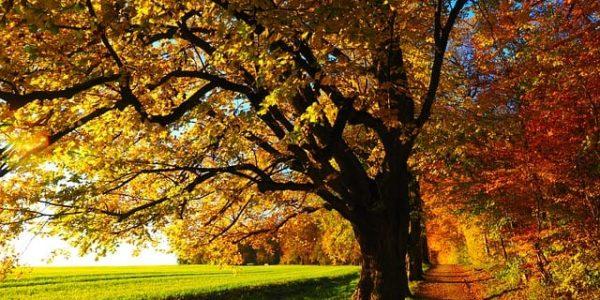Herbst_Baum