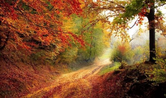 Herbstroad-1072823_1280